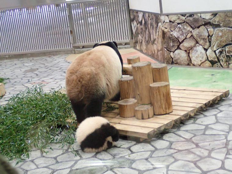 パンダ 団子