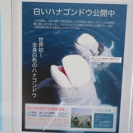 世界初全身白のハナゴンドウ