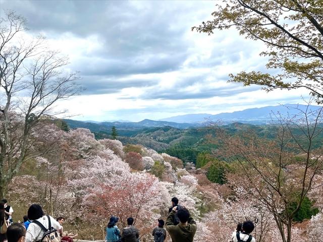 吉野山上千本