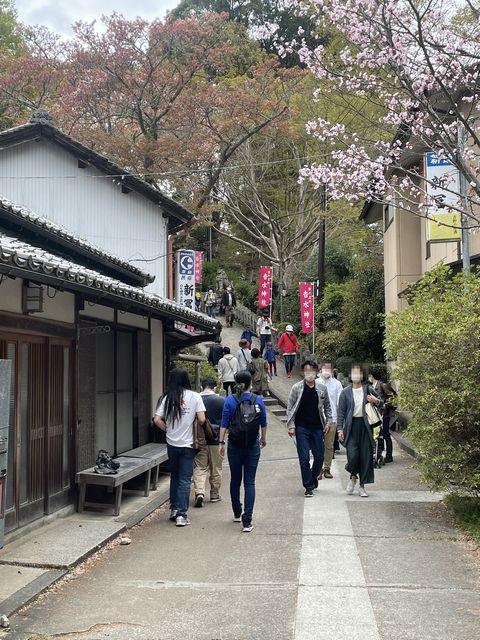 吉野山 中千本の桜