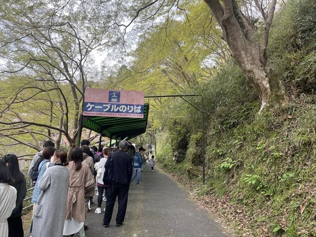 吉野山ロープウェイ 桜