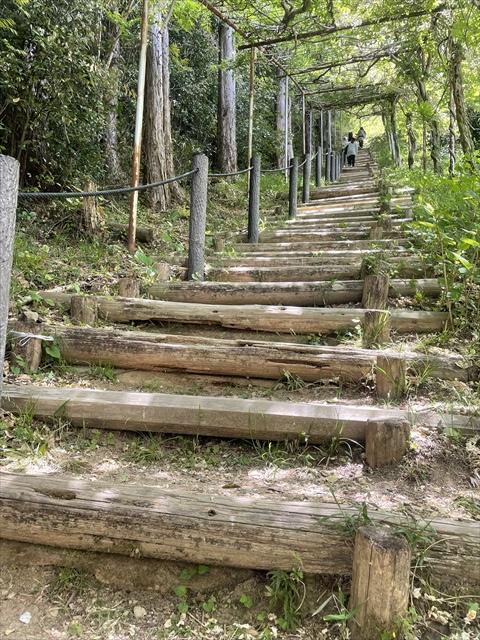 みやまの里森林公園 藤 開花状況