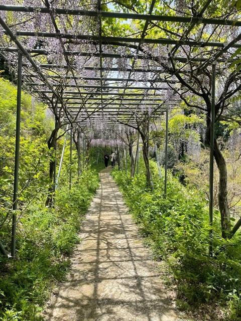 藤棚 和歌山県