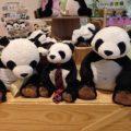 アドベンチャーワールドパンダの赤ちゃん一般公開 見に行きました!どれくらい並んだ?
